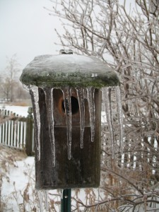 Bird house covered with ice